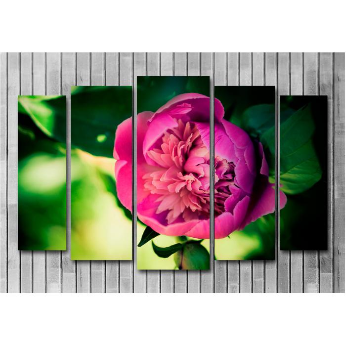 Модульная картина Розовый пион