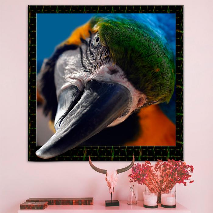 3d картина - Попугай