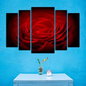 Красная роза - на темном фоне